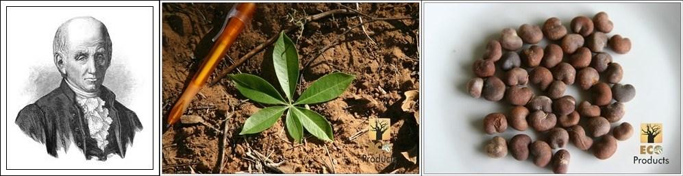 What's in a name: Adansonia digitata