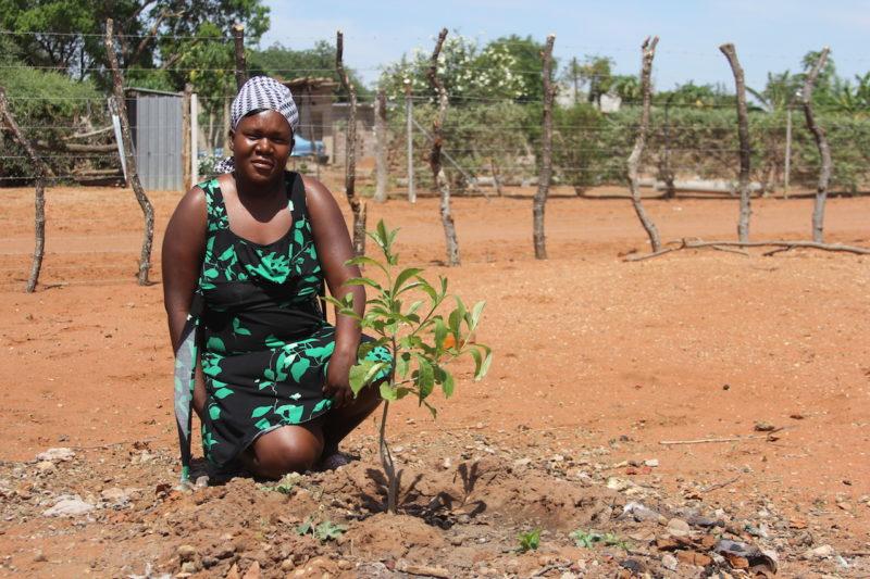 BG1 Baobab Guardian Doris Nekhumbelo