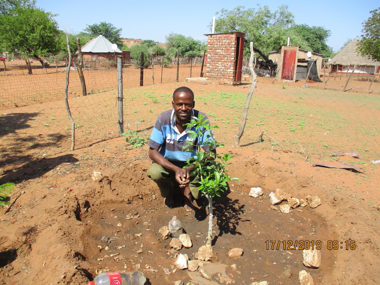 Spring Baobab Guardians
